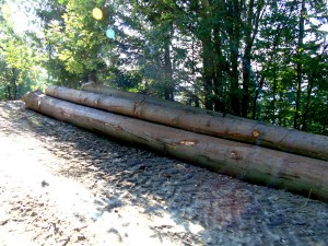 lemn-ceahlau
