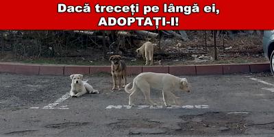 adoptie caini