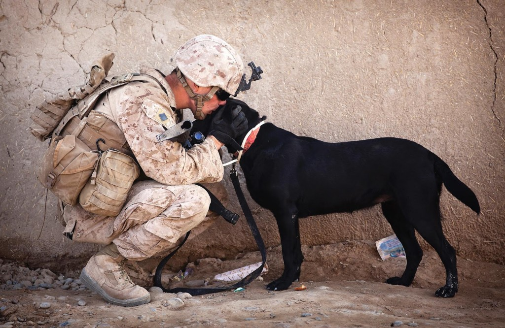 dog_and_soldier