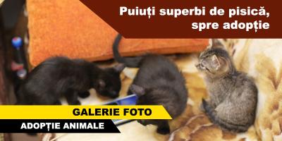 adoptie-pisici