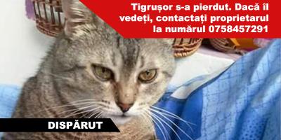 tigrusor