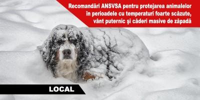 recomandari-ansvsa-pentru-protejarea-animalelor