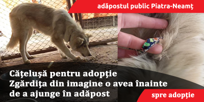 adoptie