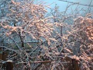 iarna (3)